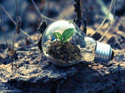 Elektro Autochampion24 Umwelt Nachhaltigkeit
